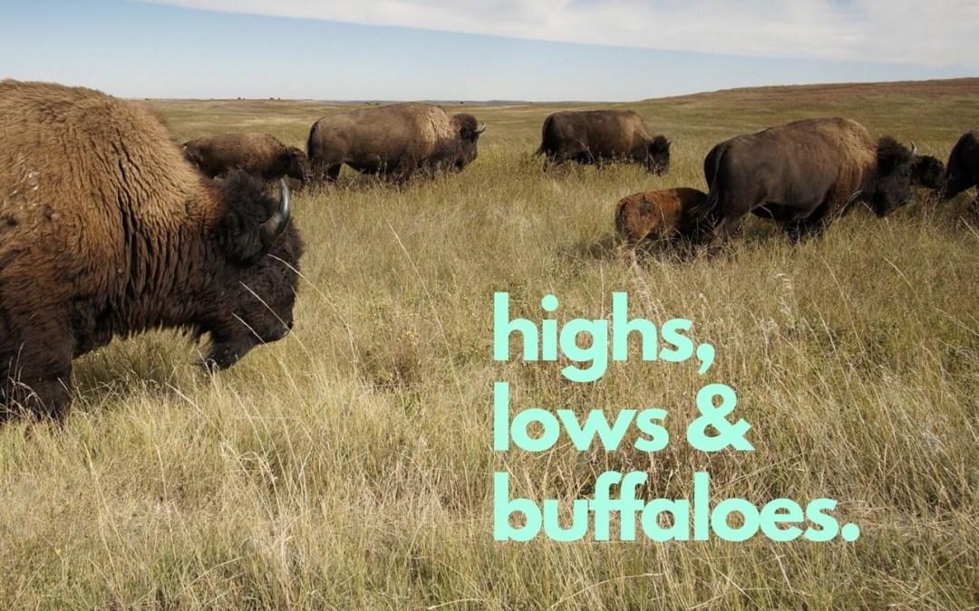 Highs, Lows, & Buffaloes