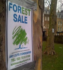 Forest_sale