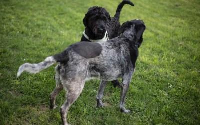 Dog Parks – Should I Take My Dog?