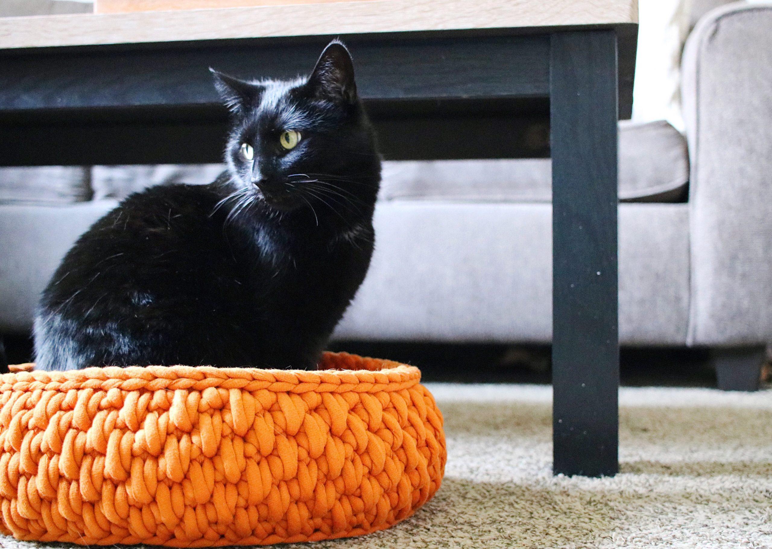 HAND CROCHET MERINO WOOL CAT BED IN 20 MINUTES.BECOZI - YouTube   2730x3838