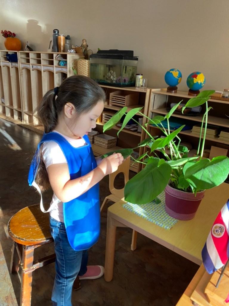 Early Childhood Plant Polishing