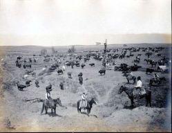 kansas-cattle-ranch