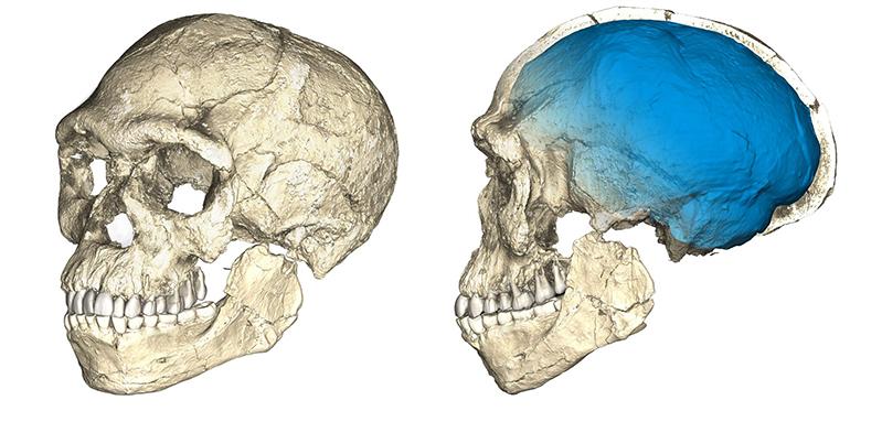 Виявлені найдавніші останки людини розумної
