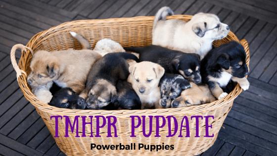 Powerball Puppies Blog