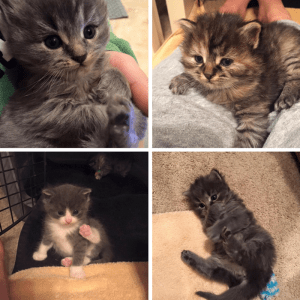 Collage of Kittens!