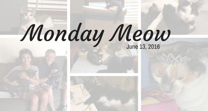 06-13-16 Monday meow