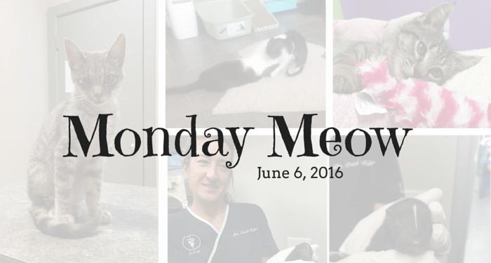 Monday Meow 6-6-16