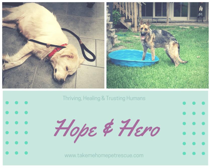 Hope & Hero