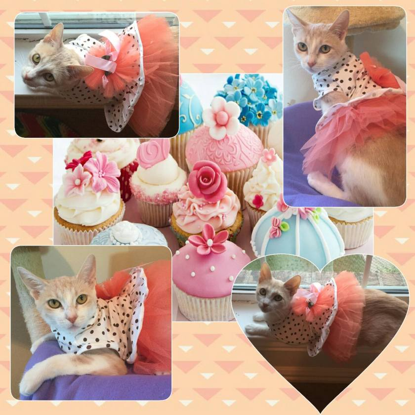 Marmalade and Cupcakes