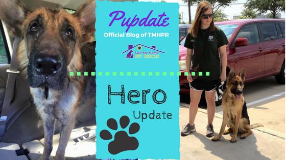Hero Update Blog