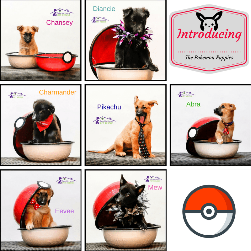 Pokemon Puppies