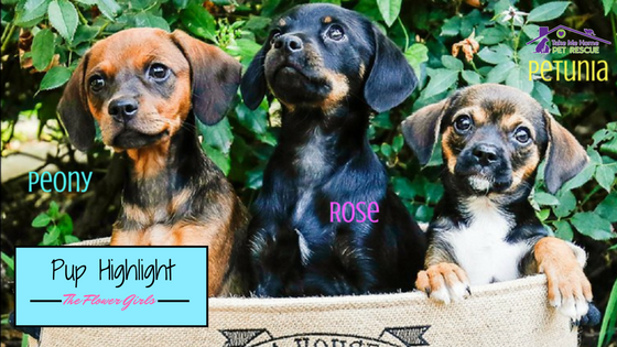 Pup Highlight Flower Girls