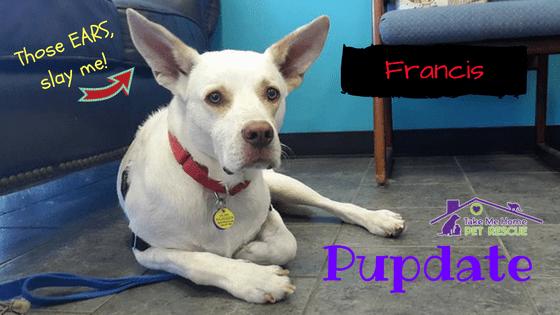 Pup Highlight Francis