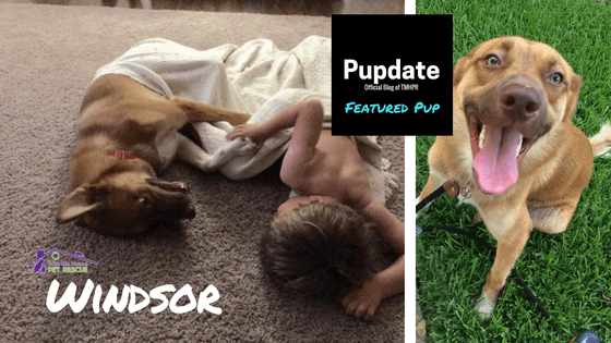 Windsor Featured Pup