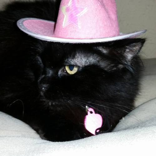 Black cats get a bad rap, especially around this time of year. Ebby loves her family (even enough to tolerate this cowboy hat)!