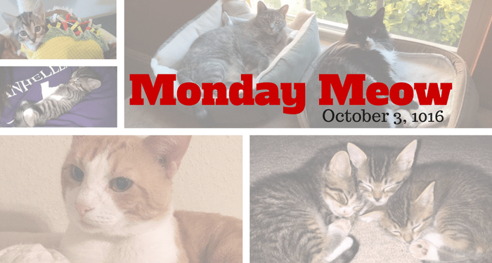 Monday-Meow-10-03-16