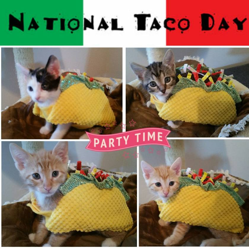 National Taco Day