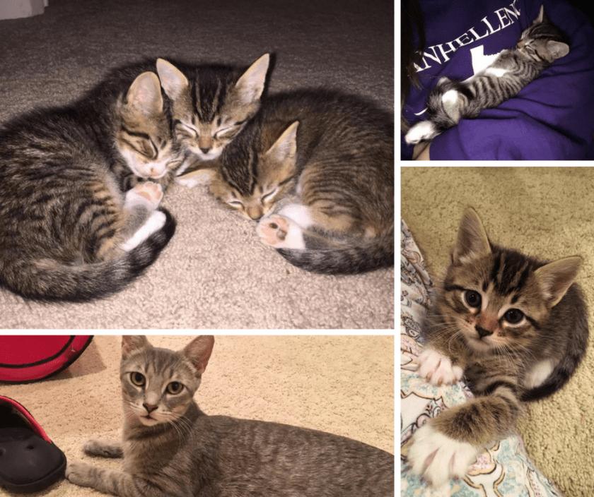Z Kittens