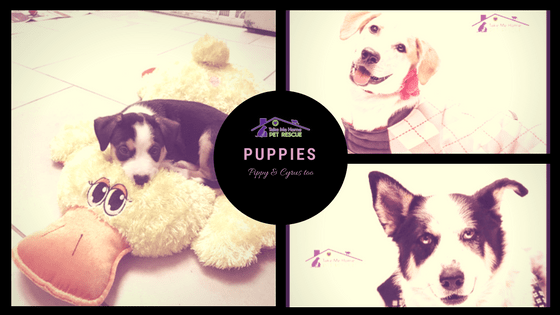 Pippy & Cyrus