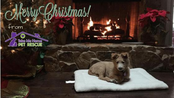 Merry Christmas blog