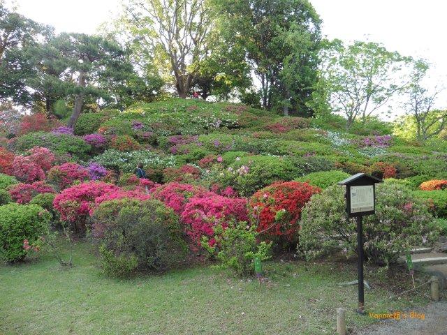 tokyo-rikugien-hill of azalea