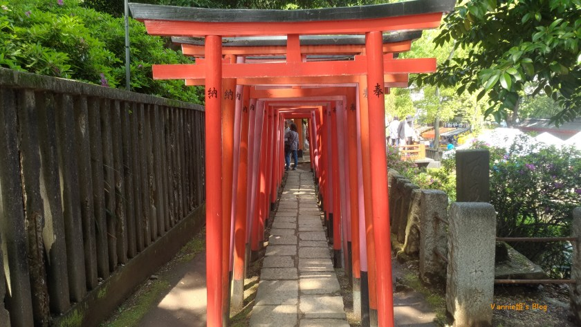 根津神社 ,千本鳥居-1