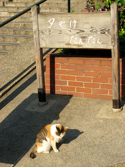 夕陽下的夕陽階梯下的貓咪