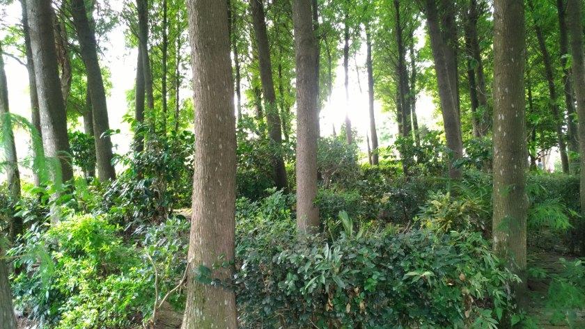 桃園觀音區 蓮荷園休閒農場 ,小森林