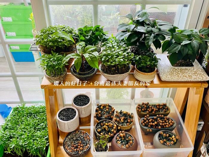 退休興趣 種子盆栽