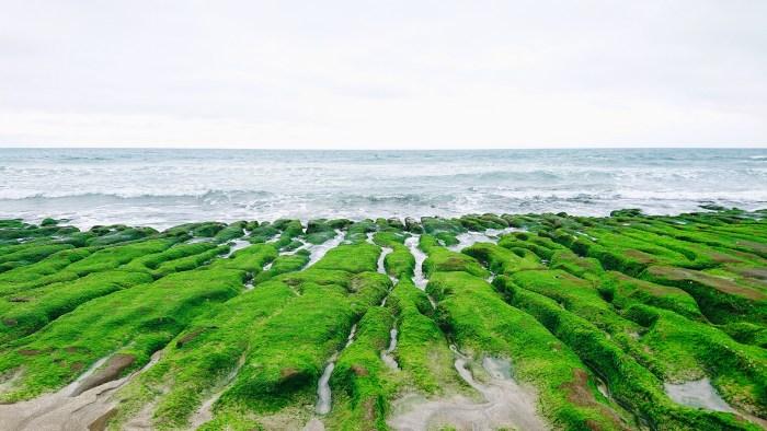 五月的 老梅綠石槽