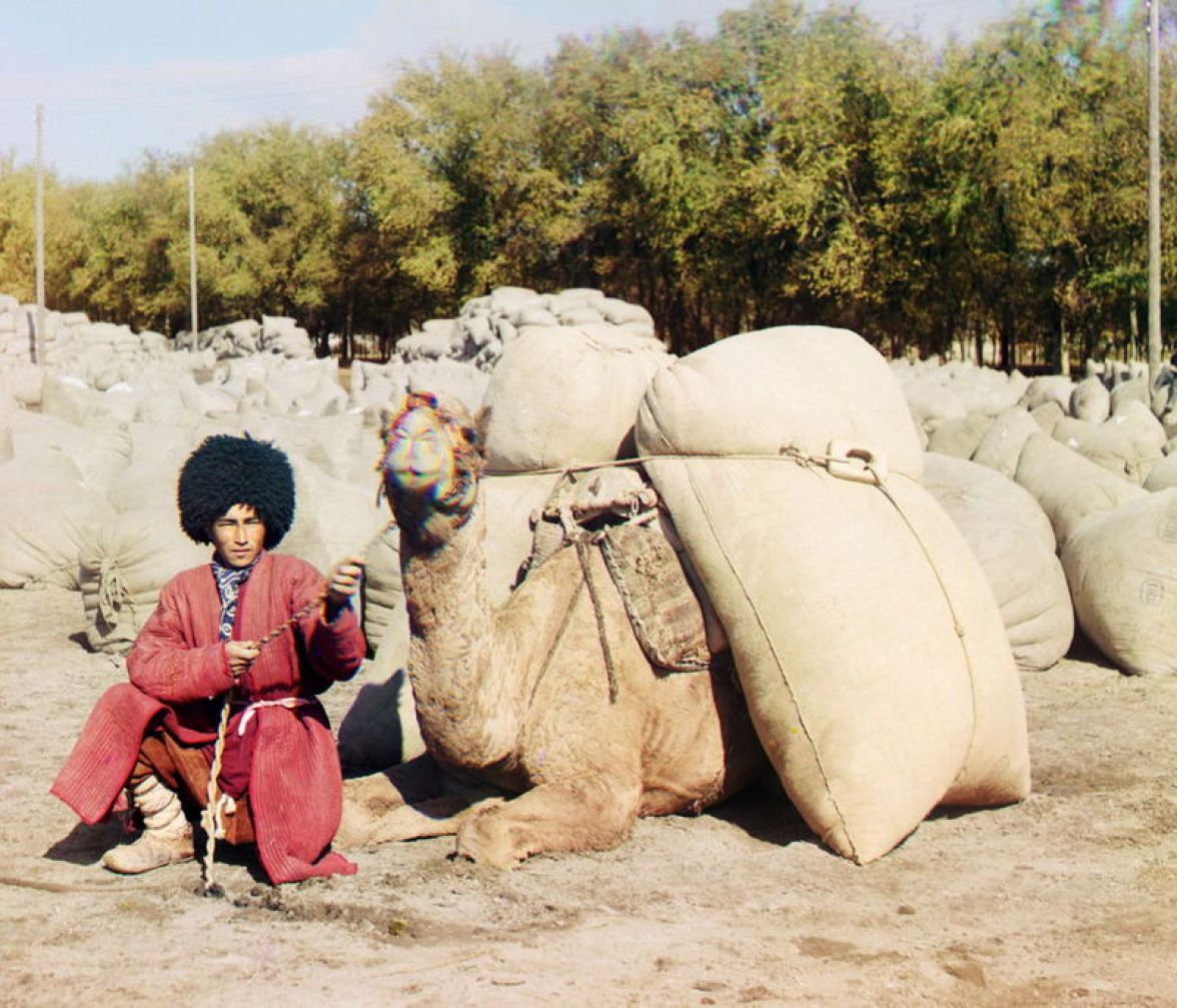 Prokudin-Gorskii, Sergei Mikhailovich. Turkman With Camel and Sacks of Cotton, 1911. 1 negative (3 frames) : glass, b&w, three-color separation. Library of Congress, Prokudin-Gorskii Collection.