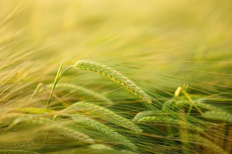 Food Technology and Research to Boost Crop Nutrients