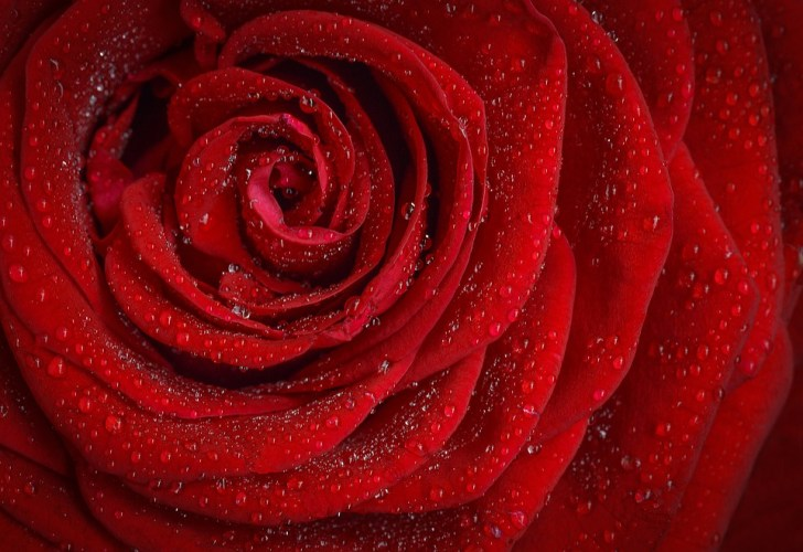 This Rose for 2 Cents Can Purify Water