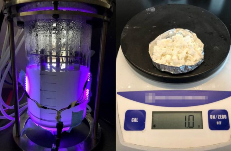 Microbial Factories to Produce Environmentally Friendly Products