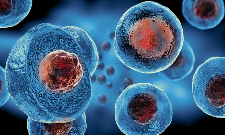Enhancing Stem Cells Potency Aids in Bone Marrow Transplantation