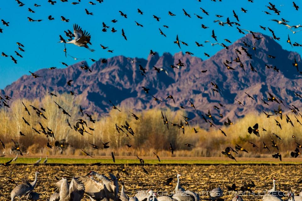 Cibola Bird Swarm by T.M. Schultze