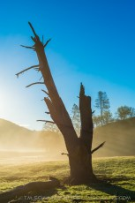 Dead Tree in Sunrise Mist