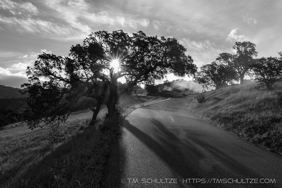 Lone Oak, Figueroa Mountain-Black and White # 2, by T.M. Schultze