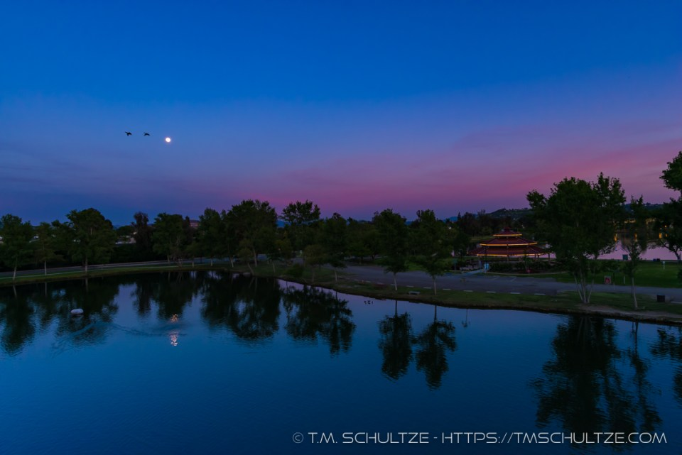 Birds, Moonlight, Santee Lakes, by T.M. Schultze