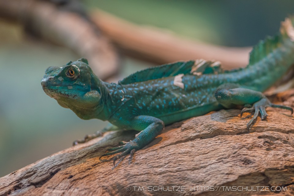 Some Kind of Lizard