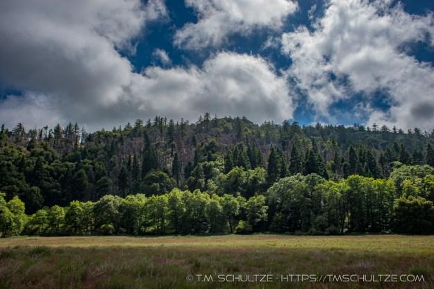 Ridge Renewal by T.M. Schultze