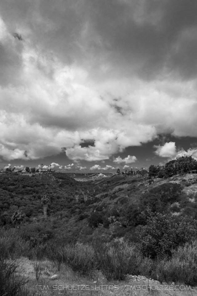 Little Palm Canyon by T.M. Schultze