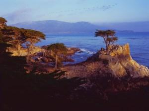 Monterey Cypress Birds