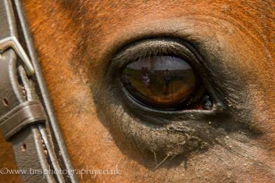 Horse_eye-Reflection