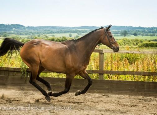 In flight_horse