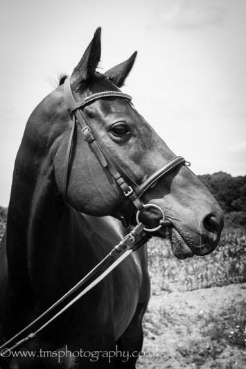 Mono_equine_photography