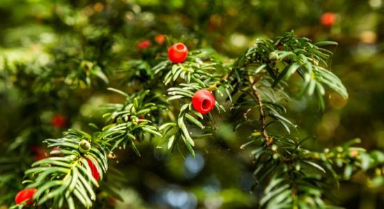 Berries and webbs
