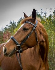 EquinePhotography-0009EquinePhotoshoot_tmsphotography