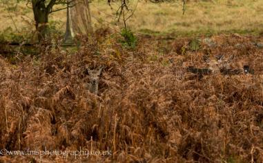 Red Deer_bradgatePark