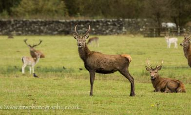 Red Stag_SomethingFunny